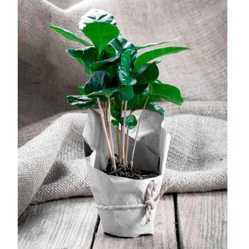 kafeodentro
