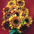 Sunflower The Joker F1