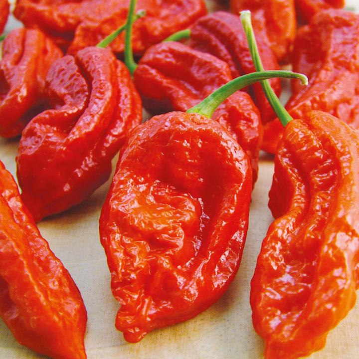 poly chilli kayteri piperia bhut jolokia fiery furnace