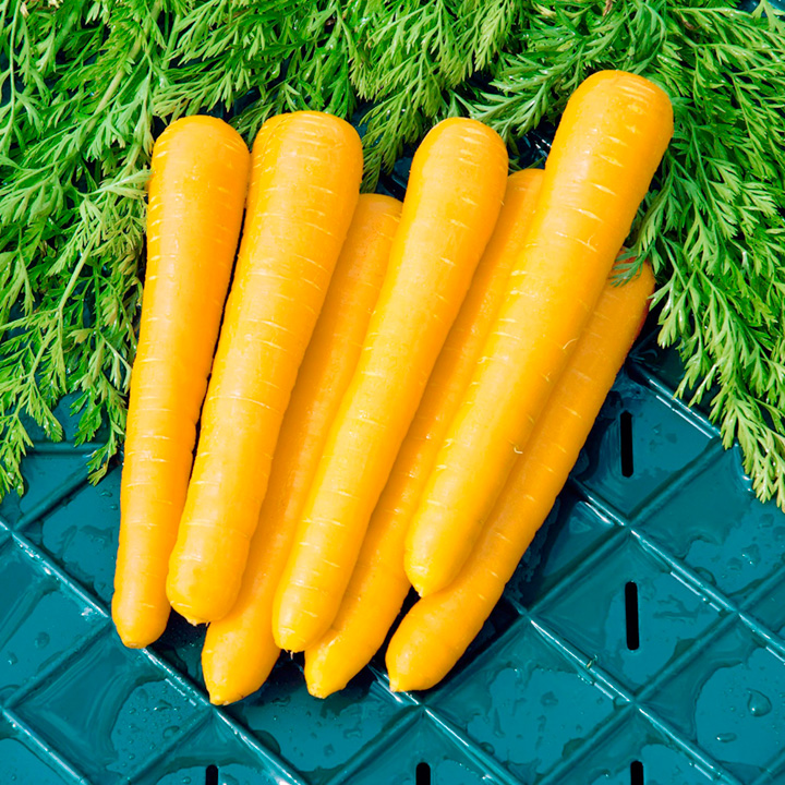 Carrot Seeds - F1 Gold Nugget