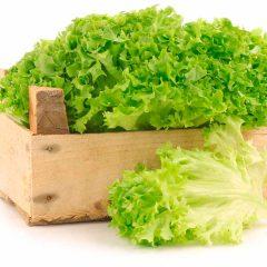 salata sgouri