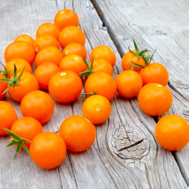 tomata-portokali-sungold-f1