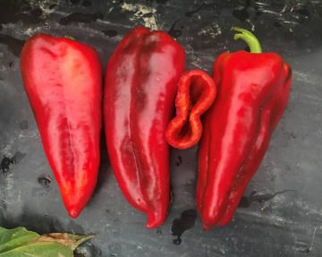 piperia-florinis-kapia-paprika